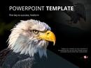 독수리 테마 (동물) PPT 배경템플릿