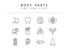 인체 라인 아이콘 3종세트