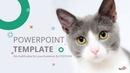 고양이 테마 (동물) 파워포인트 배경화면