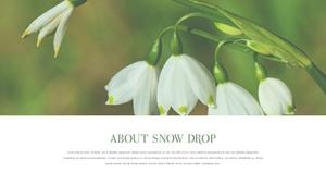 스노우드롭 (Snowdrop) PPT template