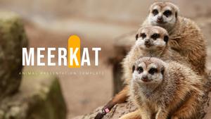 미어캣 (Meerkat) ppt 템플릿