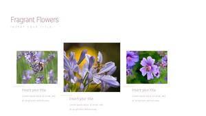 꽃 과 벌 (Flower & Bee) 파워포인트 PPT 템플릿