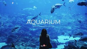 아쿠아리움, 수족관 (Aquarium) ppt 템플릿