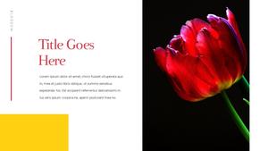 Tulip  튤립 PPT 16:9(파워포인트>프리미엄 PPT>자연/환경) - 예스폼 쇼핑몰 #15