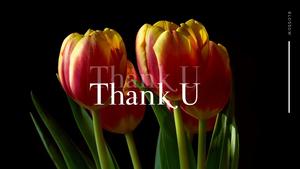 Tulip  튤립 PPT 16:9(파워포인트>프리미엄 PPT>자연/환경) - 예스폼 쇼핑몰 #35