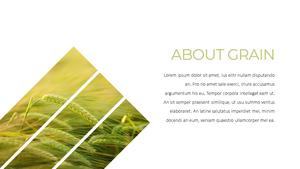 곡식, 곡물 (Grain) 파워포인트 template