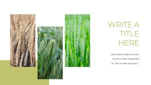 곡식, 곡물  Grain 파워포인트 template(파워포인트>프리미엄 PPT>자연/환경) - 예스폼 쇼핑몰 #7