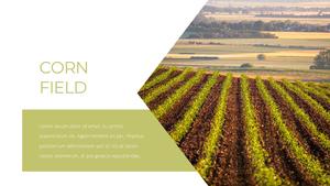 곡식, 곡물  Grain 파워포인트 template(파워포인트>프리미엄 PPT>자연/환경) - 예스폼 쇼핑몰 #9