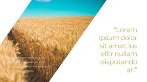 곡식, 곡물  Grain 파워포인트 template(파워포인트>프리미엄 PPT>자연/환경) - 예스폼 쇼핑몰 #10