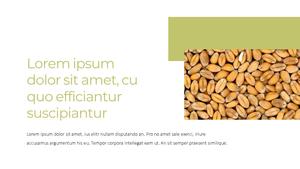 곡식, 곡물  Grain 파워포인트 template(파워포인트>프리미엄 PPT>자연/환경) - 예스폼 쇼핑몰 #11