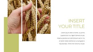 곡식, 곡물  Grain 파워포인트 template(파워포인트>프리미엄 PPT>자연/환경) - 예스폼 쇼핑몰 #12