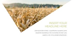 곡식, 곡물  Grain 파워포인트 template(파워포인트>프리미엄 PPT>자연/환경) - 예스폼 쇼핑몰 #14