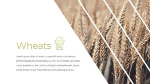 곡식, 곡물  Grain 파워포인트 template(파워포인트>프리미엄 PPT>자연/환경) - 예스폼 쇼핑몰 #17