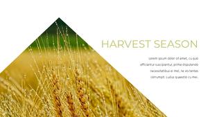 곡식, 곡물  Grain 파워포인트 template(파워포인트>프리미엄 PPT>자연/환경) - 예스폼 쇼핑몰 #18