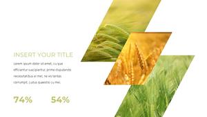 곡식, 곡물  Grain 파워포인트 template(파워포인트>프리미엄 PPT>자연/환경) - 예스폼 쇼핑몰 #20