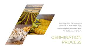 곡식, 곡물  Grain 파워포인트 template(파워포인트>프리미엄 PPT>자연/환경) - 예스폼 쇼핑몰 #23
