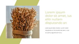 곡식, 곡물  Grain 파워포인트 template(파워포인트>프리미엄 PPT>자연/환경) - 예스폼 쇼핑몰 #24