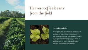 커피 농장 (Coffee Plantation) 템플릿