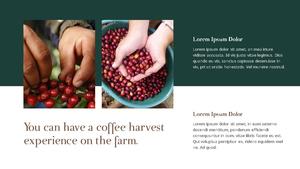 커피 농장  Coffee Plantation 템플릿(파워포인트>프리미엄 PPT>자연/환경) - 예스폼 쇼핑몰 #21