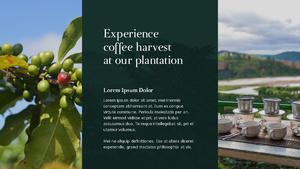 커피 농장  Coffee Plantation 템플릿(파워포인트>프리미엄 PPT>자연/환경) - 예스폼 쇼핑몰 #22