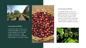 커피 농장  Coffee Plantation 템플릿(파워포인트>프리미엄 PPT>자연/환경) - 예스폼 쇼핑몰 #23