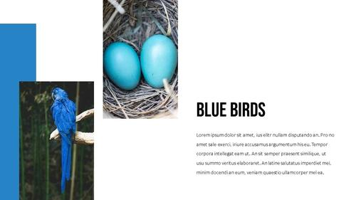 블루 스펙트럼 (Blue Spectrum) PPT 16:9 - 섬네일 18page